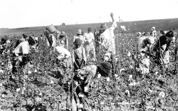 Laborers in the fields picking cotton - Jefferson County, Florida. 189-. Black & white photoprint, 8 x 10 in. State Archives of Florida, Florida Memory.